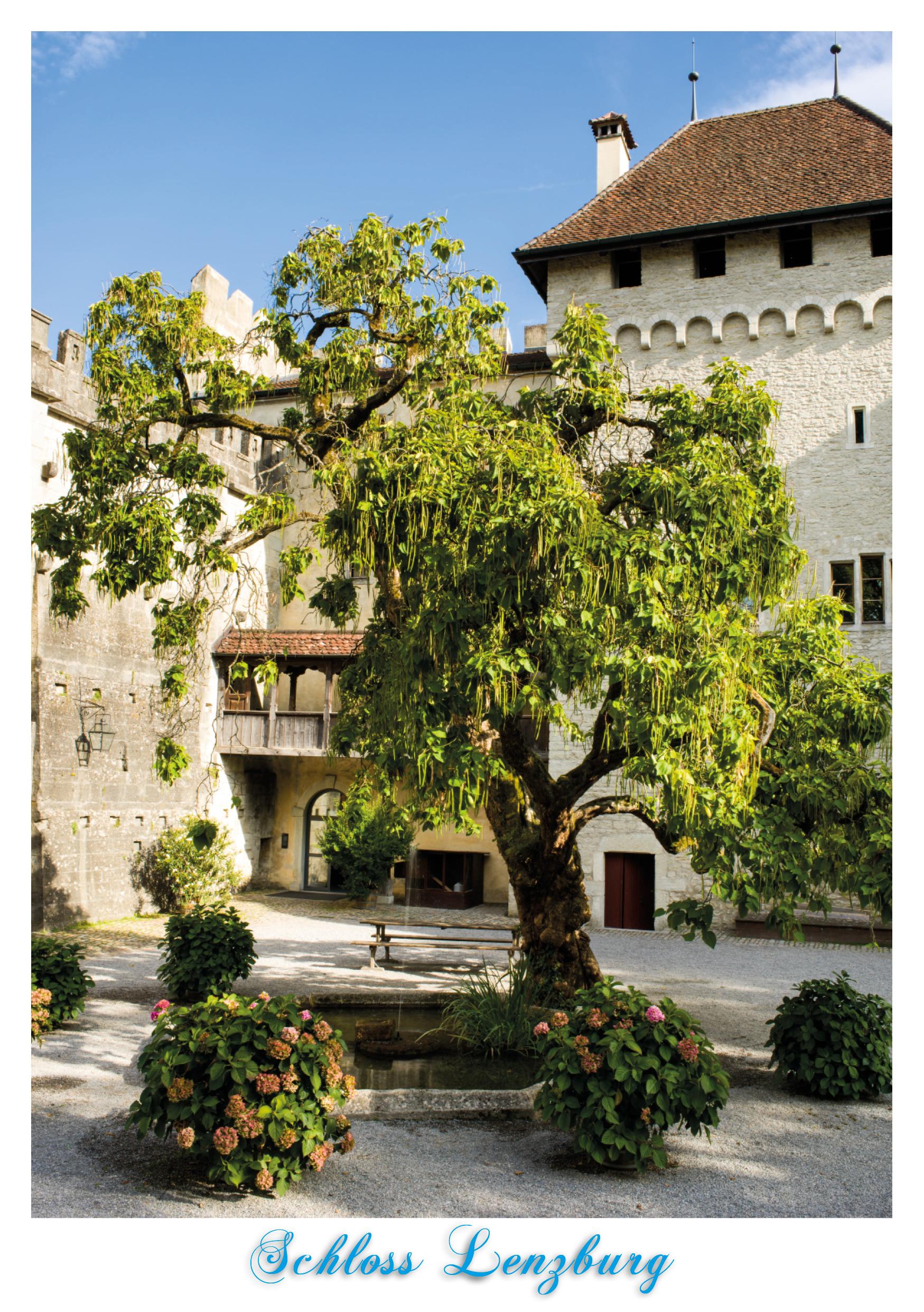 Schloss_Lenzburg_Lebens-Baum_-_8444881_A5-CMYK